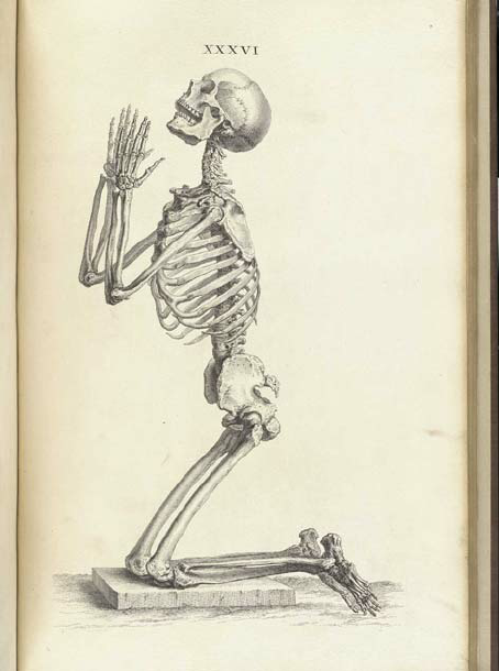 William-Cheselden-Osteographia-or-The-anatomy-of-the-bones-London-1733-Courtesy-of