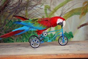 loro_en_bicicleta-640x640x80